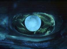 flutemouth-eye1.jpg