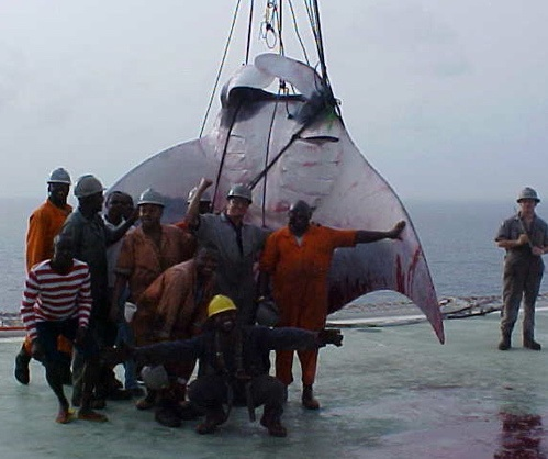 giantmanta1.jpg