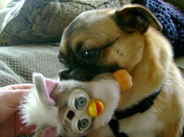 Furby Love