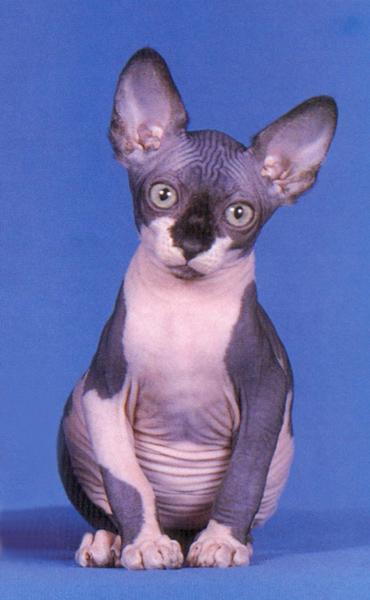 naked_cat